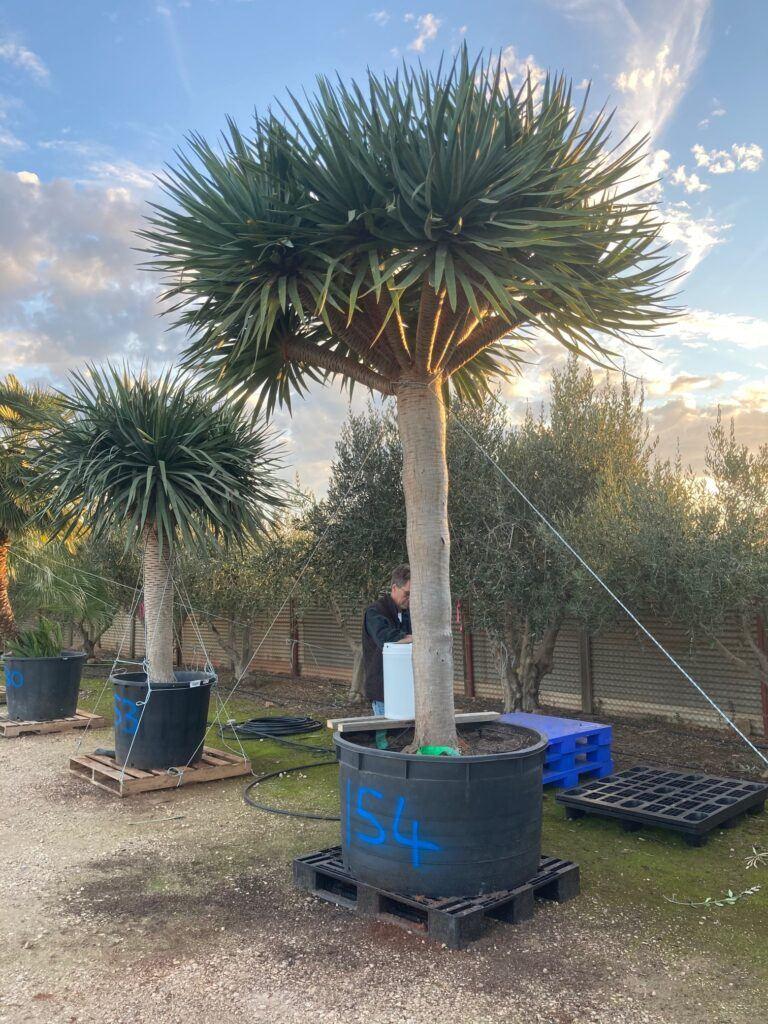 Palm Finder