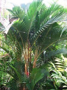 Tropical Palm in a Garden