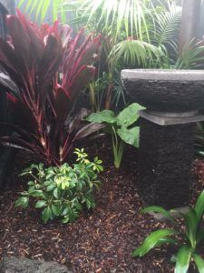 Tropical Balinese Plants with Water Feature