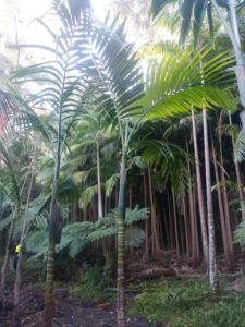Flamethrower palm