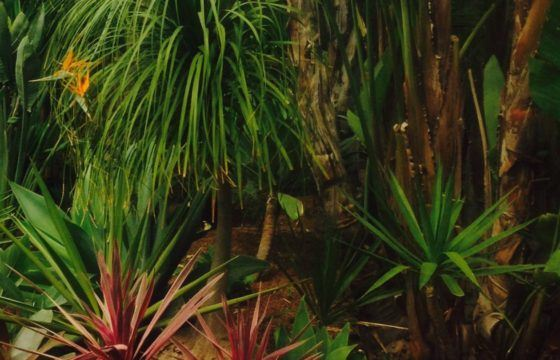 The Best Palms To Plant By Your Pool If You Live In Melbourne