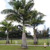 Advanced Palms